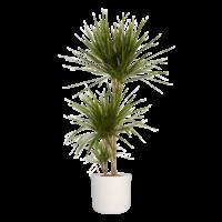 thumb-Dracaena Marginata in ® ELHO b.for soft sierpot (24x125 cm)-4