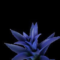 thumb-Decorum Guzmania Ocean Blue (BLUEST - 13x55 cm)-2