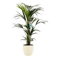 thumb-Decorum Kentia Palm - Elho brussels soap (21x100 cm)-1