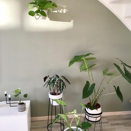Waarom online planten kopen?