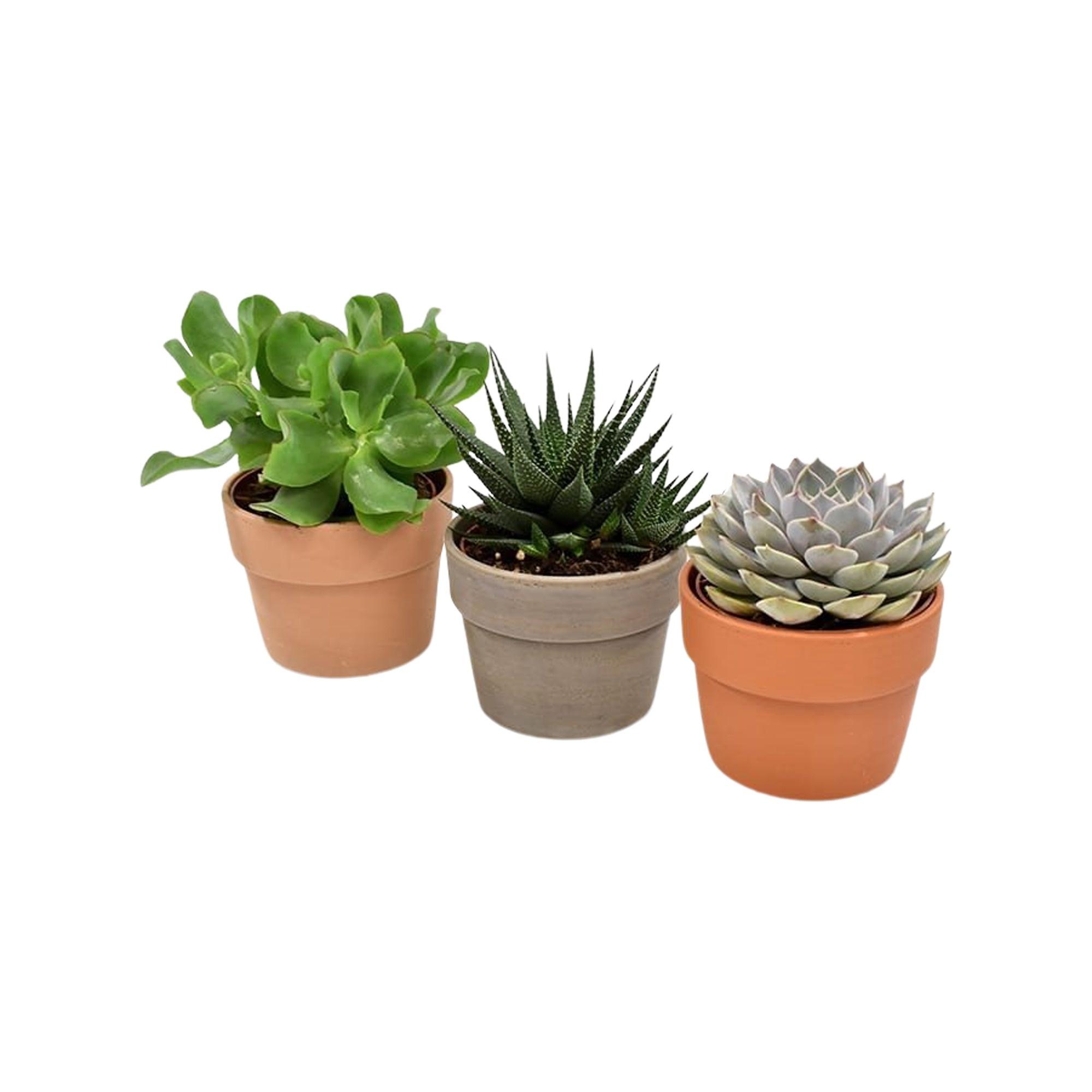 Trio vetplanten in terracotta keramiek (AS 258 - 10,5x16 cm)