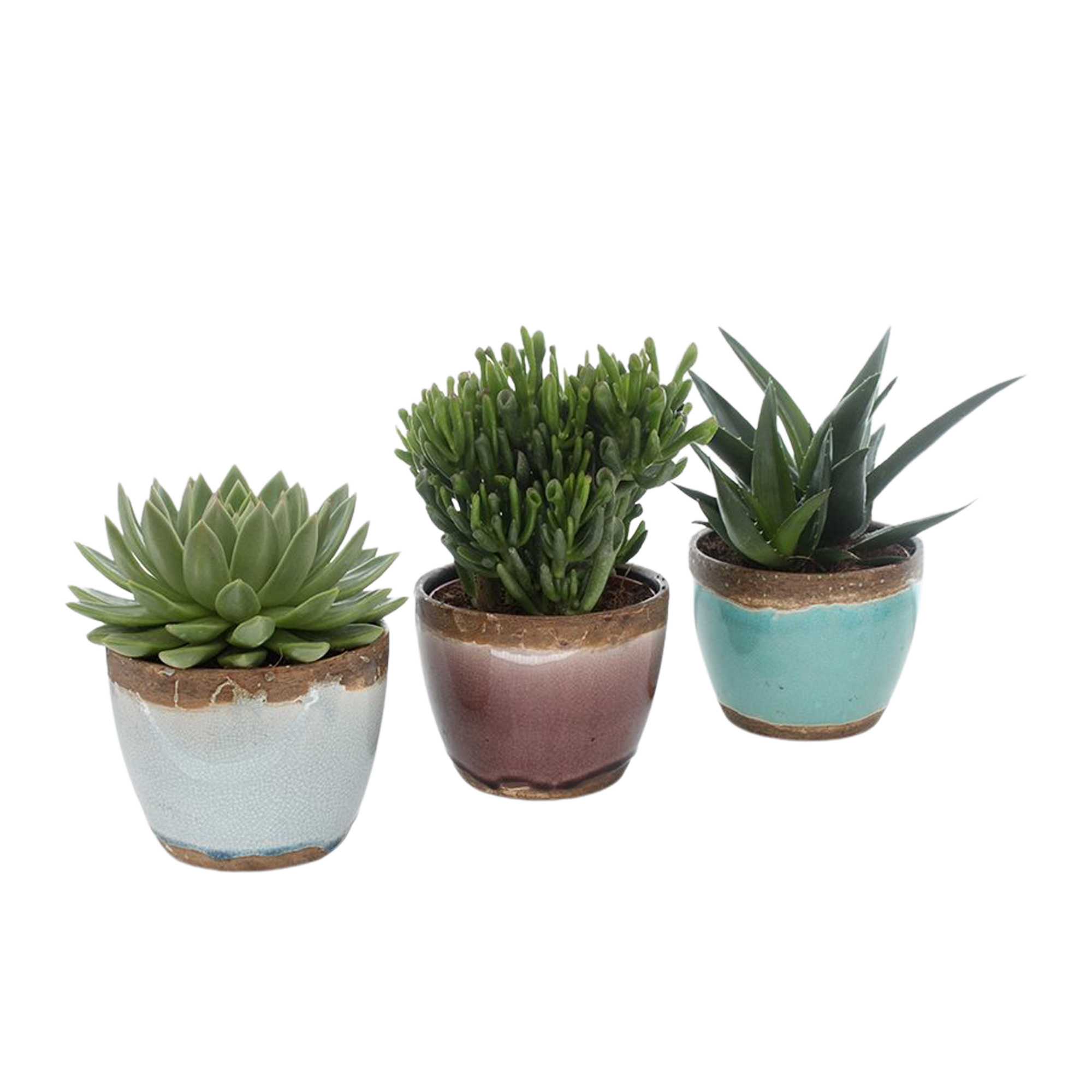 Set van 3 vetplanten in Old Look keramiek (AS202 - 15x20 cm)