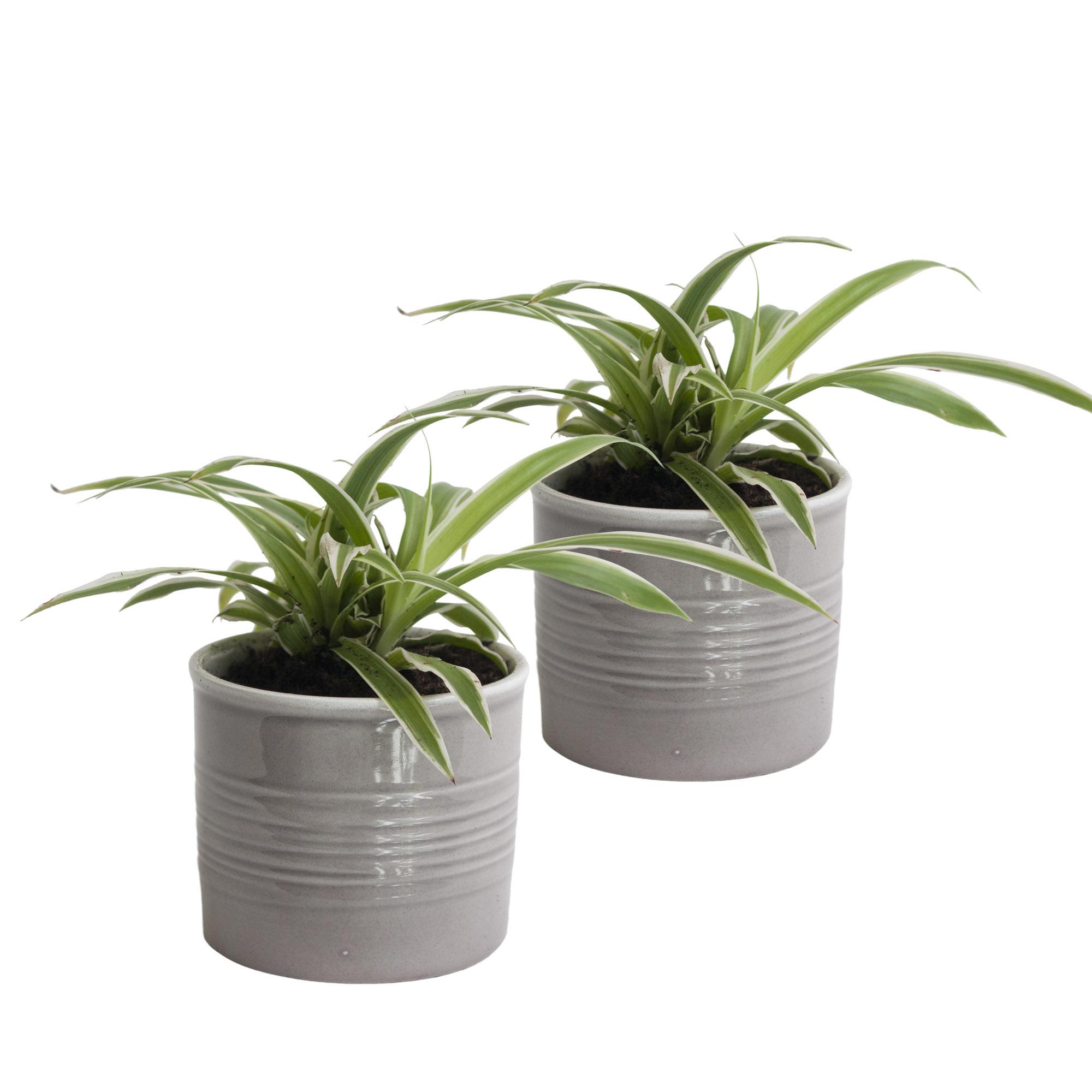 Duo graslelie in keramiek (grijs) (10x12 cm)