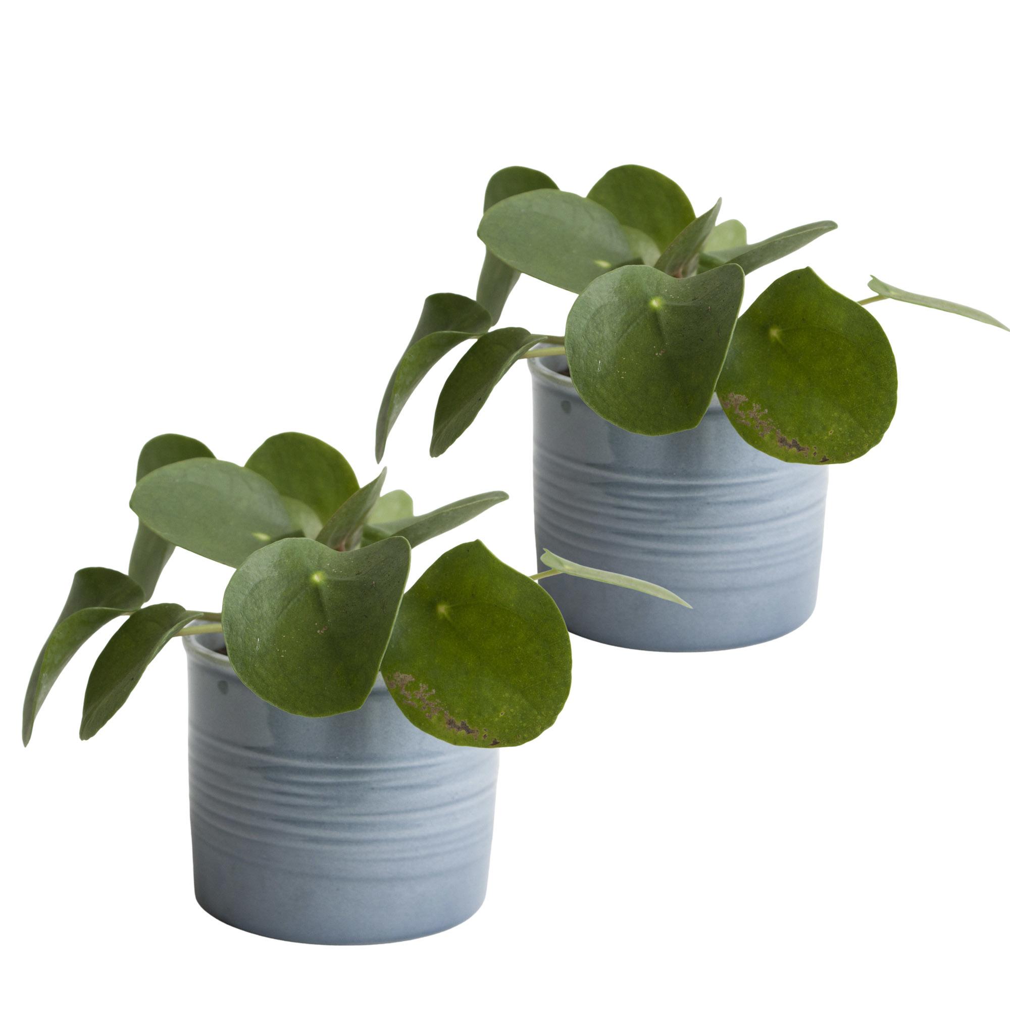 Duo Pannenkoekplant in keramiek (blauw) (10x12 cm)