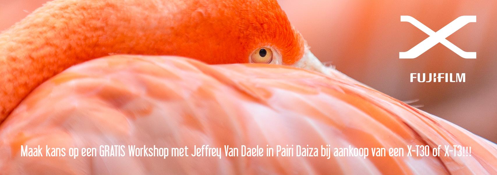 Gratis mee naar Pairi Daiza bij aankoop X-T30 en X-T3.