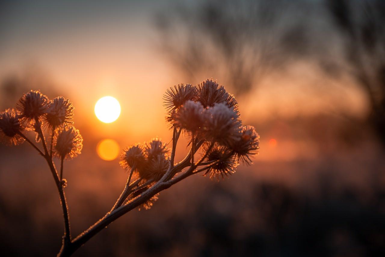 Zonneboiler: haal de zon in huis