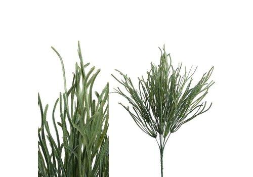 PTMD Leaves plant green sea grass bush