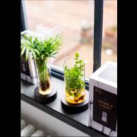 thumb-LED Vase Sue-2