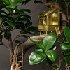 Sprout / Botanopia Botanopia - tiny treehouse