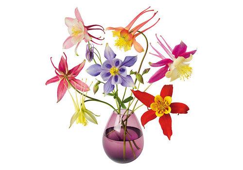 Flatflowers Flat flowers - raamsticker - o - aquilegia