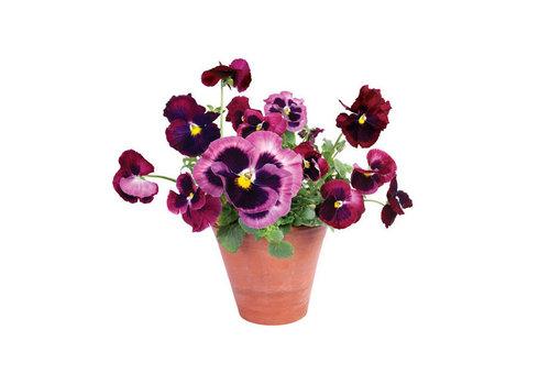 Flatflowers Flat flowers - raamsticker - u - violets
