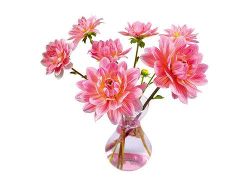 Flatflowers Flat flowers - raamsticker - f - dahlia vase