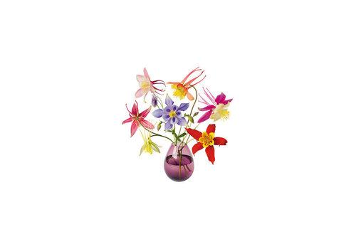 Flatflowers Flat flowers - ansichtkaart raamsticker - 018 - aquilegia