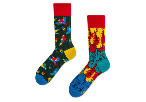 Many mornings Many mornings - sokken - paradise parrot