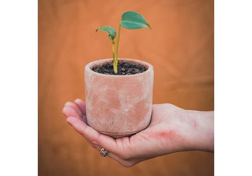 Grow your ownn Grow your ownn - kweekset plant - monstera deliciosa
