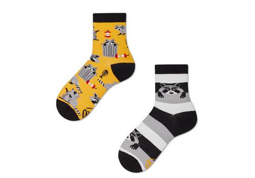Many mornings Many mornings - sokken kids - raccoon bandit