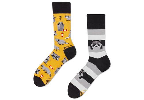 Many mornings Many mornings - sokken - raccoon bandit