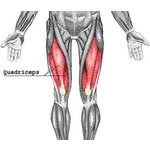 Quadriceps injury? Buy thigh brace!