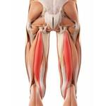 Hamstring thigh brace