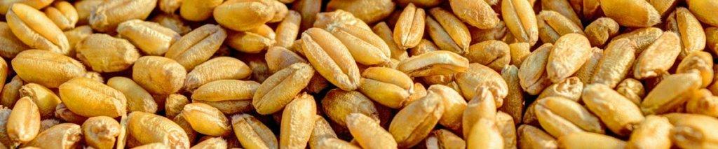 Is glutenvrij gezond?