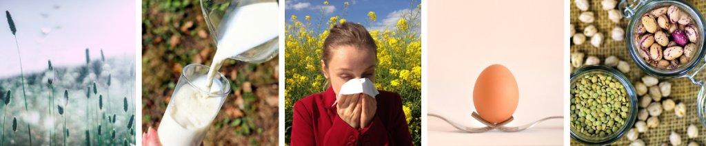 Schema kruisallergie: hier zie je de veel voorkomende kruisallergieën