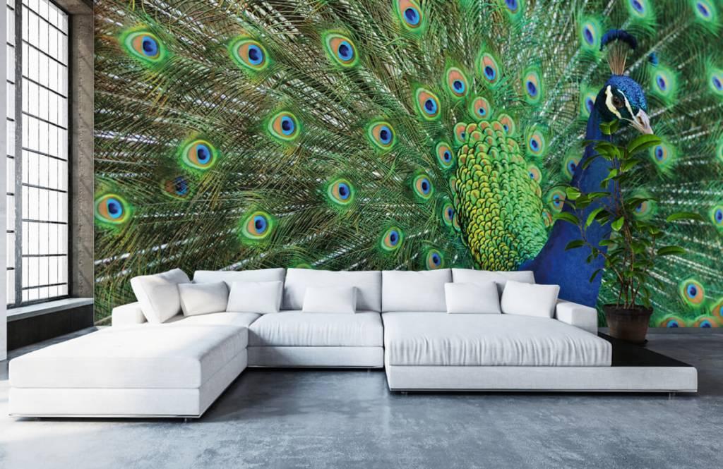 behang met een pauw - Pauw Behang