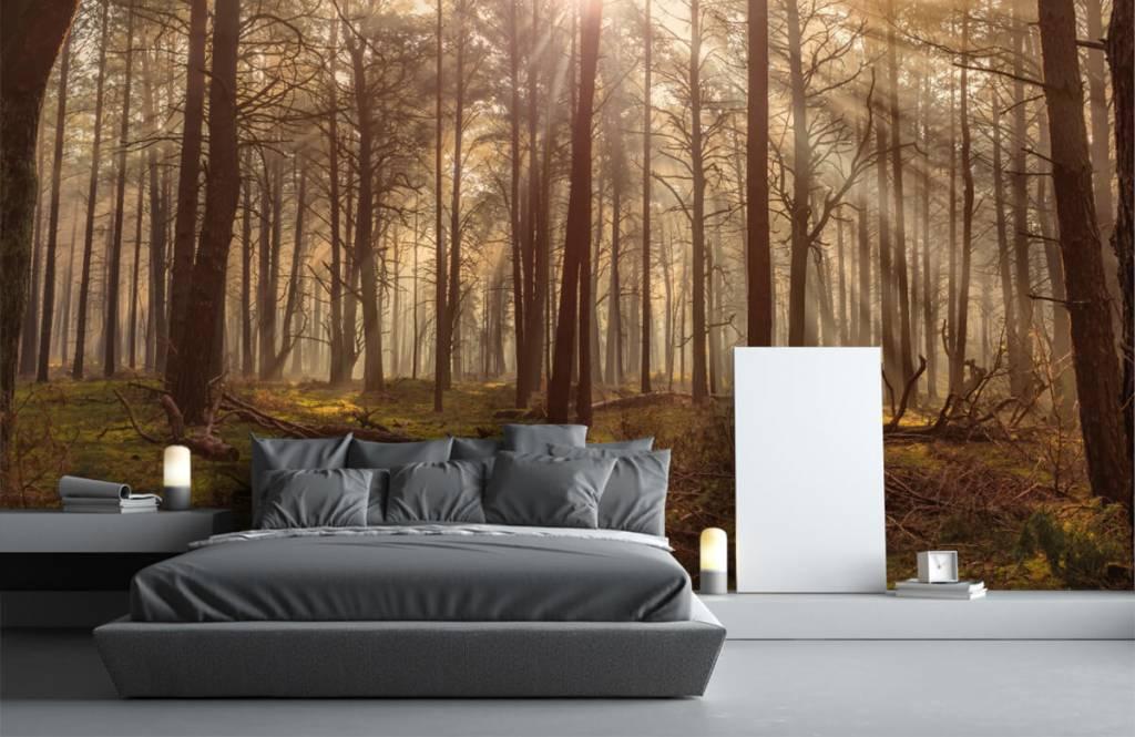 Geliefde Behang met bos met hoge bomen - Fotobehang #ZJ34