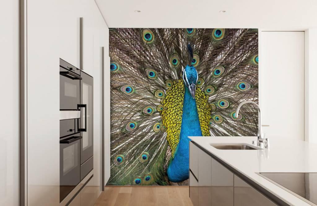 Pauw met opgezette veren op fotobehang