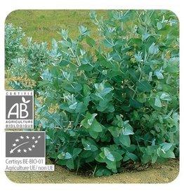 Sjankara Eucalyptus BIO olie 11 ml