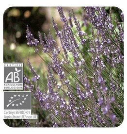 Sjankara Lavandin BIO olie 11 ml (lavendin)