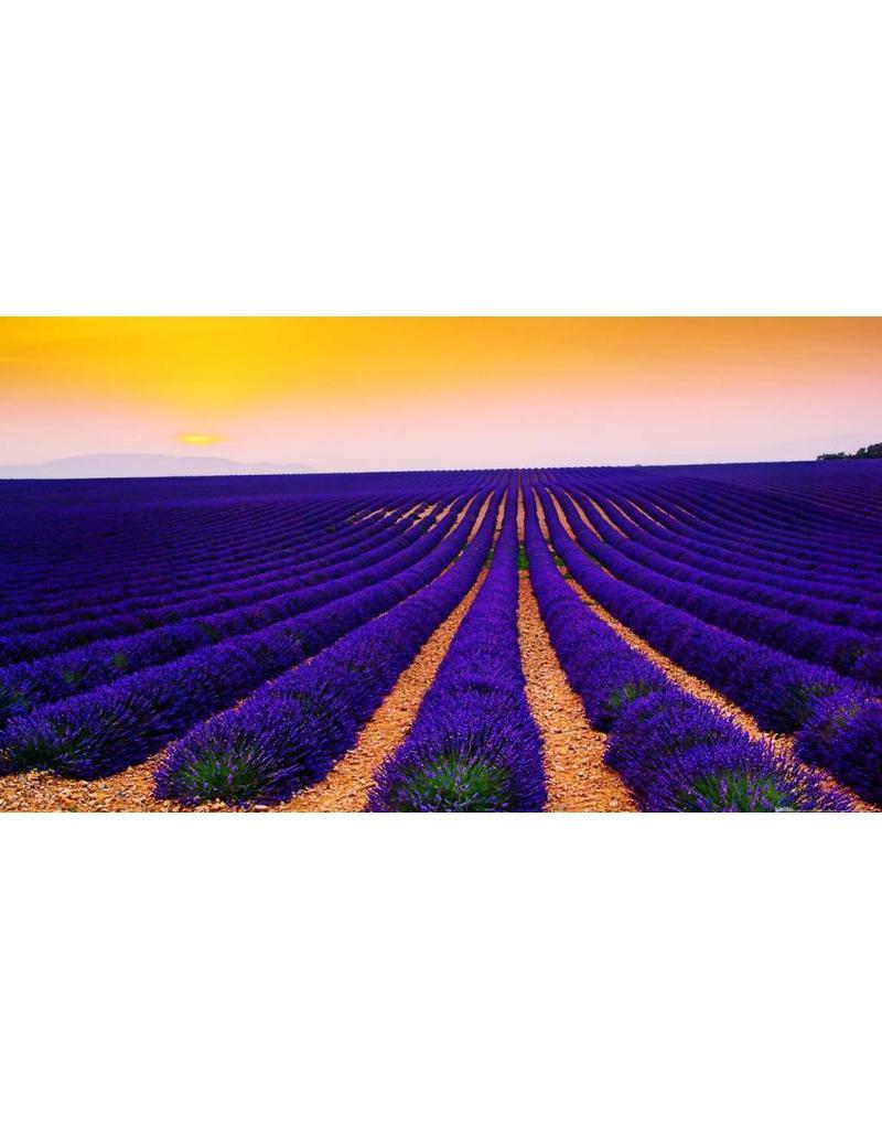 Sjankara Lavendel BIO olie 11 ml