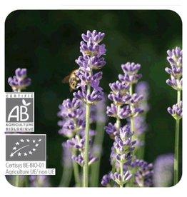 Sjankara Lavendel spijk BIO olie 11 ml