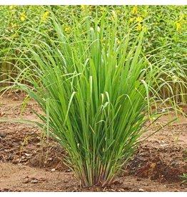 Sjankara Lemongrass BIO olie 11 ml