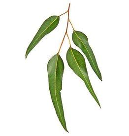De Groene Linde Eucalyptus citrodora etherische olie 10 ml