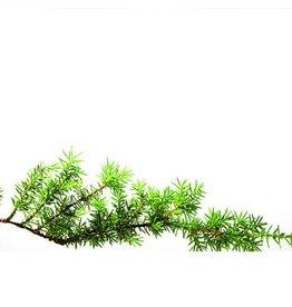 De Groene Linde Jeneverbes hout etherische olie 10 ml