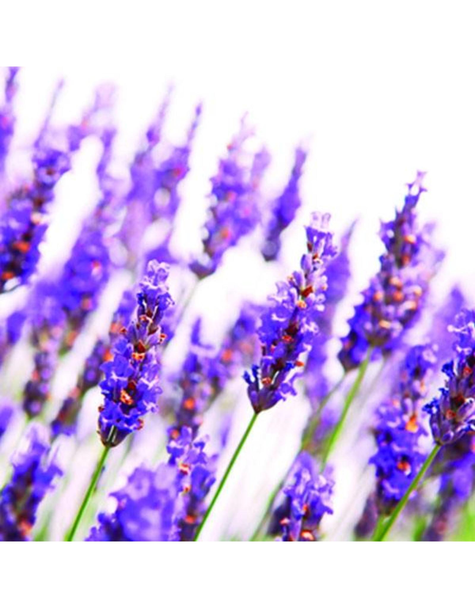 De Groene Linde Lavendel etherische olie 10 ml