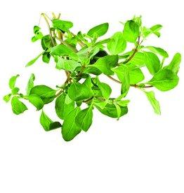 De Groene Linde Oregano etherische olie 10 ml