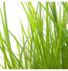 De Groene Linde Palmarosa etherische olie 10 ml
