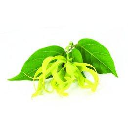 De Groene Linde Ylang Ylang etherische olie 10 ml