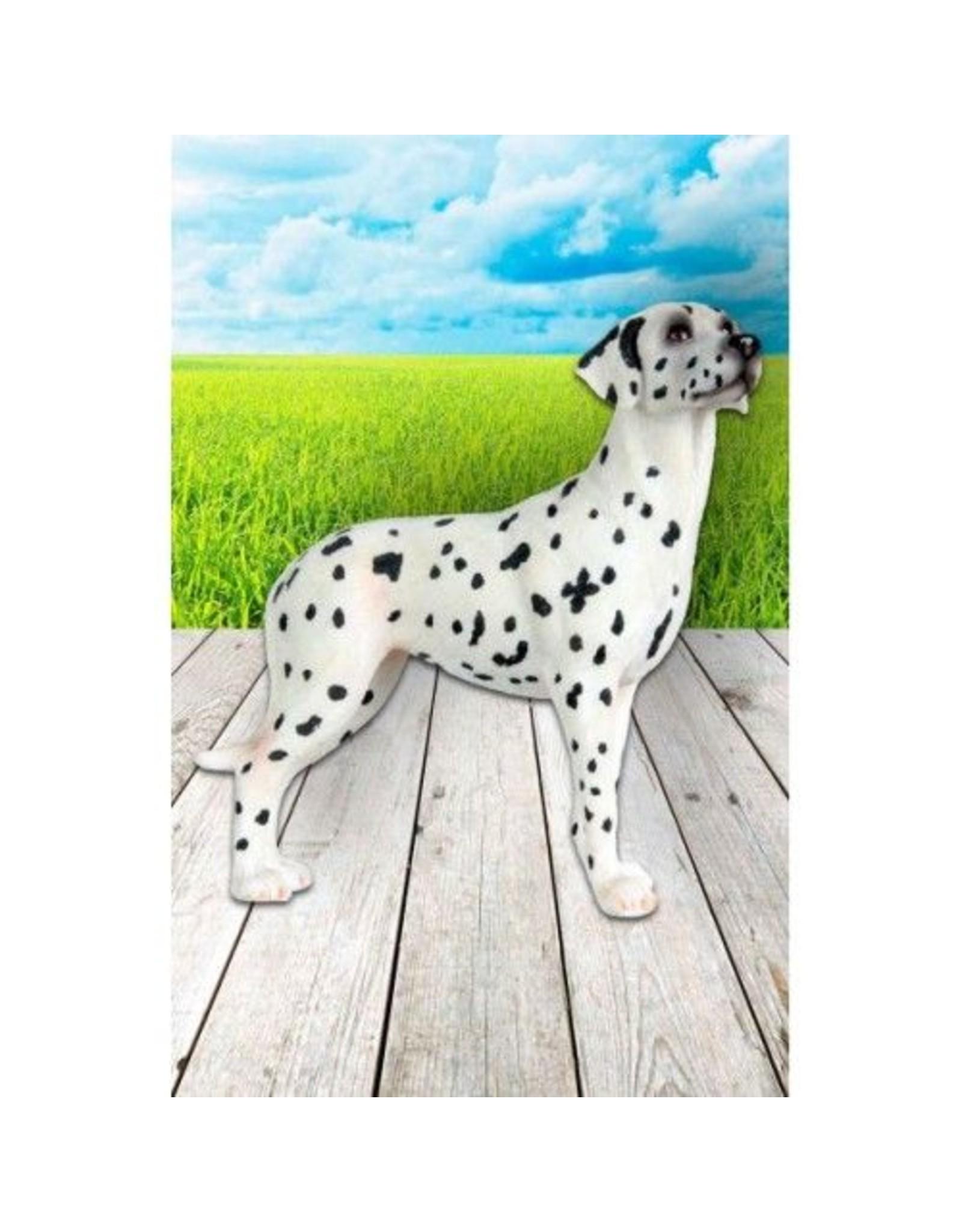Dalmatiër beeld