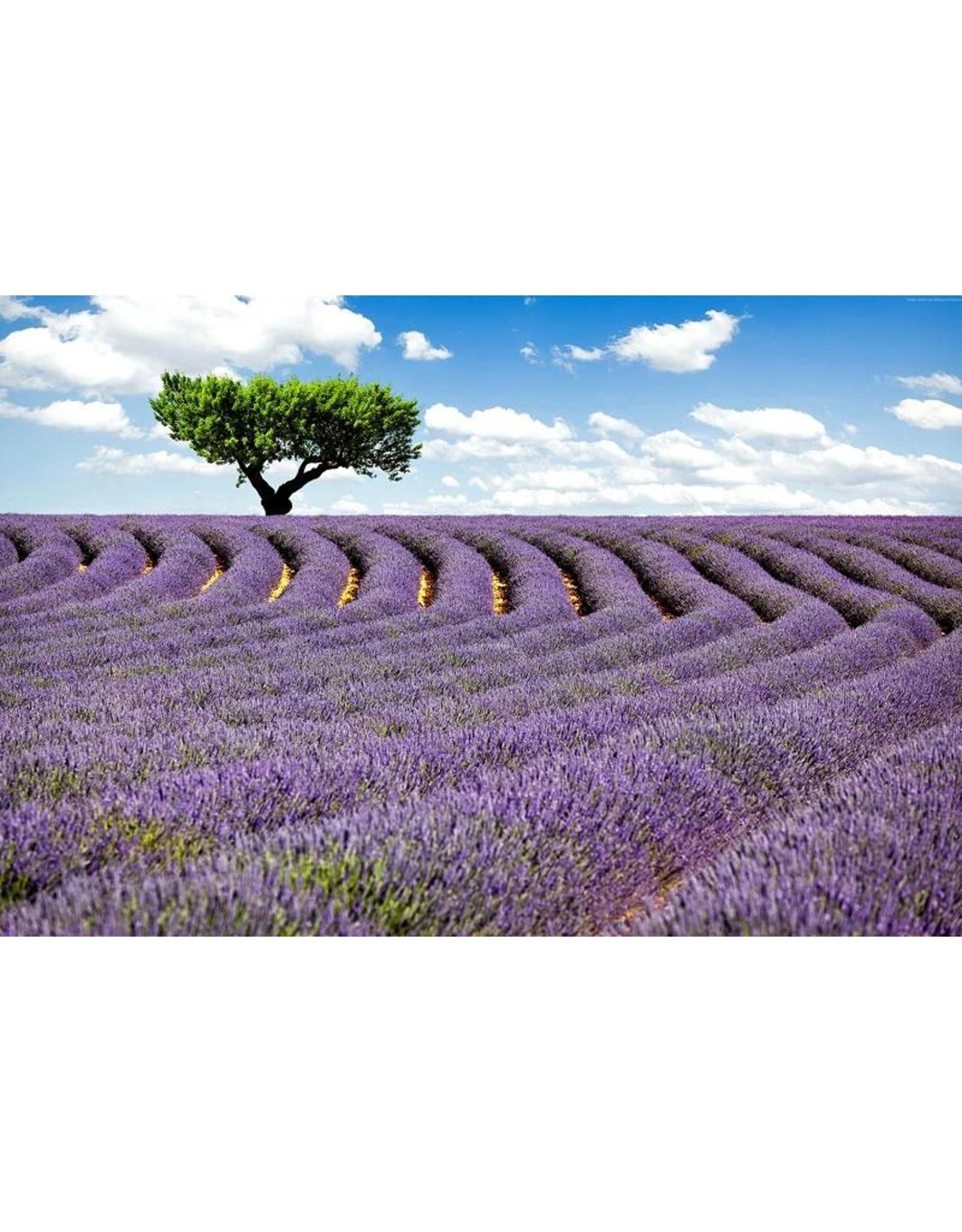 Volatile Lavendel berg etherische olie 5 ml