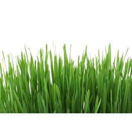 De Levensboom Gras parfumolie 5 ml