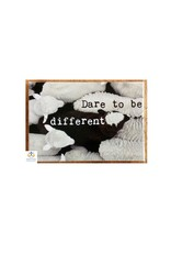 Zintenz Magneet dare to be different