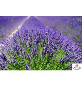 Volatile Lavendel Franse etherische olie 10 ml  Volatile