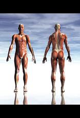 De Groene Linde Massage olie sport spierrelease