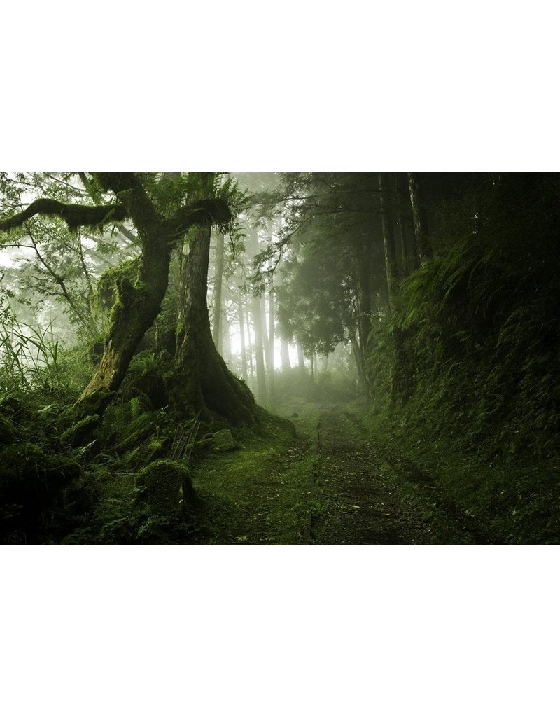 De Groene Linde Roomspray Mistic Forrest 100 ml, 100% natuurzuiver