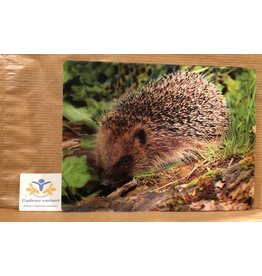 Briefkaart 3d Egel