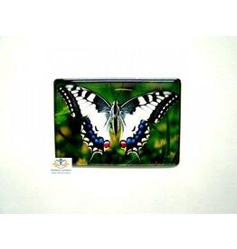 Vlinder wit zwart blauw magneet