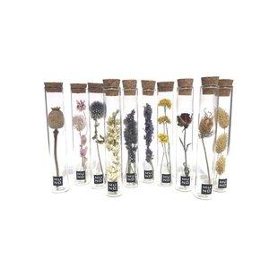 Muno Dried Flowers Tube 15 cm