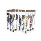 Muno Dried Flowers Tube 20 cm